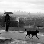 雨の日の犬の散歩はどうしたらいいのか
