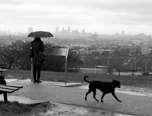 雨の中散歩にいく飼い主と黒い犬