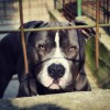 2015/4/19 ペットの王国ワンだランド感想 保護犬と世界のペット事情
