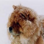 2015/3/15 ペットの王国ワンだランド感想 意外と飼われていない珍しい犬特集