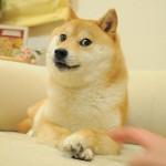2015/4/5 ペットの王国ワンだランド感想 流し目の写真で世界的に有名な柴犬かぼす