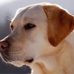 2015/5/10 ペットの王国ワンだランド感想 週4日登山する犬とグレートピレニーズ