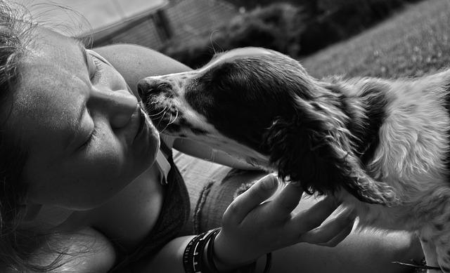 飼い主を慰めてくれる犬
