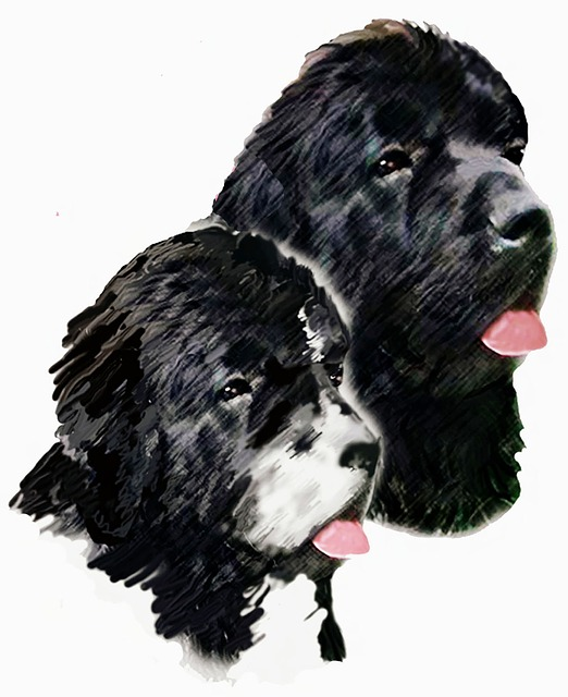 2015/6/28 ペットの王国ワンだランド感想 水難救助犬ニューファンドランドと甲斐犬