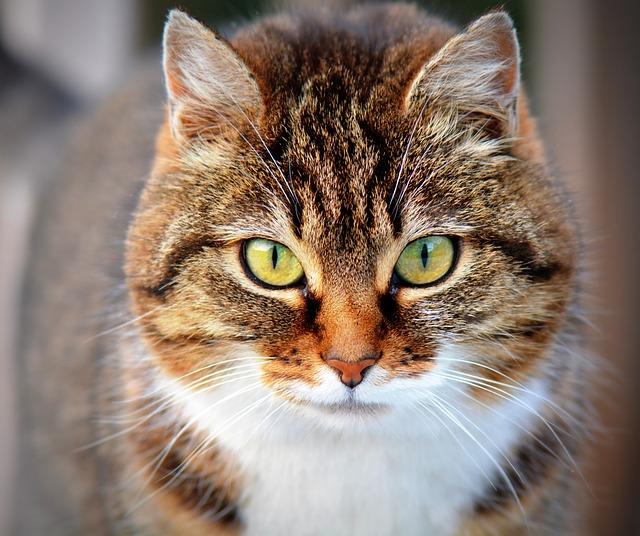 正面から撮影した猫