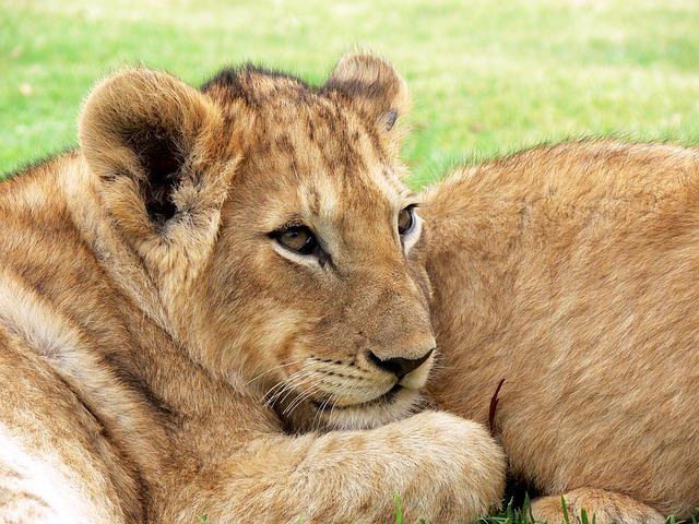 2015/8/2 ペットの王国ワンだランド感想 夏休み特集 動物園と多摩川の生き物調査