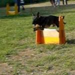 2015/7/19 ペットの王国ワンだランド感想 フライボールチャンピオンのAコッカーと保護犬施設