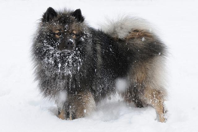 雪の上にいるキースホンド