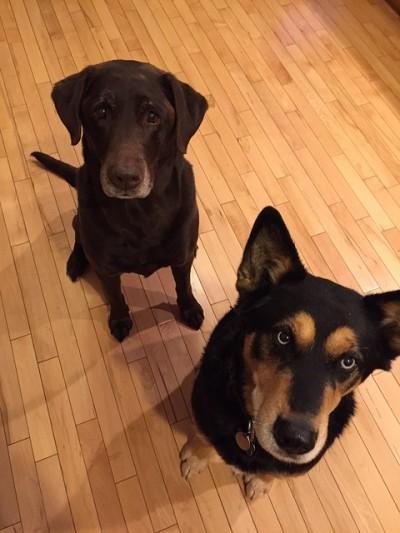 こちらを見上げる犬たち