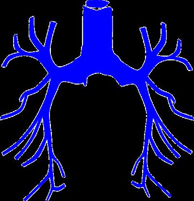 気管虚脱(器官偏平症)