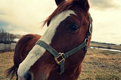 2015/9/27ペットの王国ワンだランド感想 引退馬が暮らす馬牧場と世界最大級のキツネ村