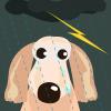 犬が雷や雷の音を怖がるのは本能のせい