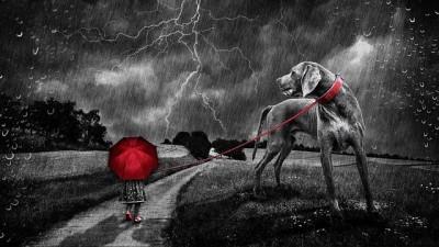 雷の中、散歩に行く犬
