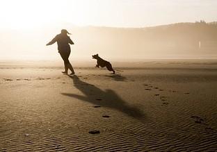 犬と追いかけっこ