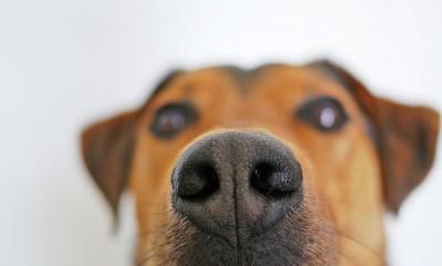 犬が人間の股間のにおいをクンクンと嗅ぐ理由