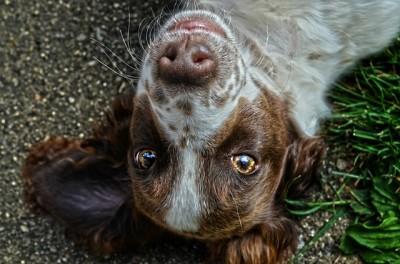 匂い付けを行う犬