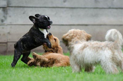 犬はボディーランゲージで喜怒哀楽を表現する