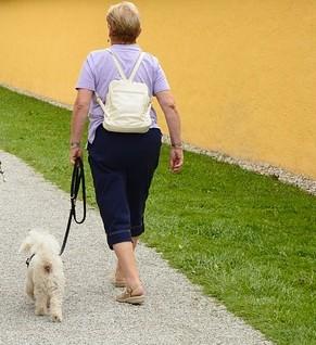 ヒールのコマンドで飼い主の横をピッタリとキープする白い犬