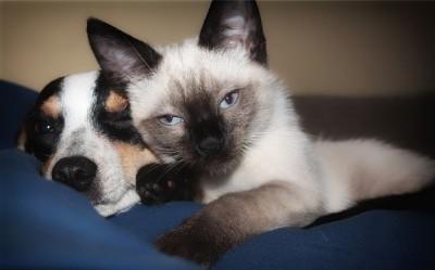 犬と猫のどちらを飼うことがお薦めですか?