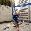 2016/1/17ペットの王国ワンだランド感想 スゴ技天才犬大集合とペット歓迎の神社