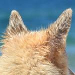 外耳道の異物