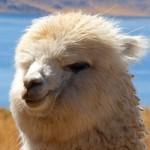 2016/3/20ペットの王国ワンだランド感想 自宅に動物王国を作った家族とアルパカ牧場